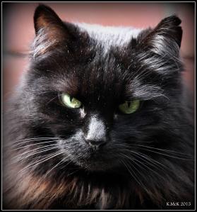 cat_4