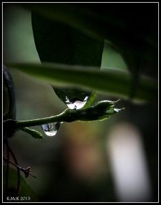 drops_2