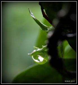 drops_5