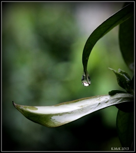 drops_6