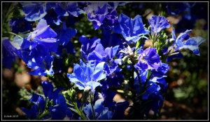 flower_10