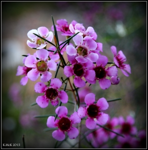 flower_11