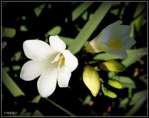 flower_16