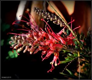 flower_24