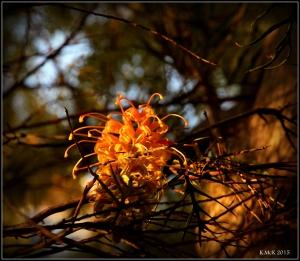 flower_31