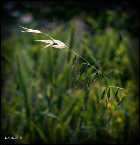 flower_37