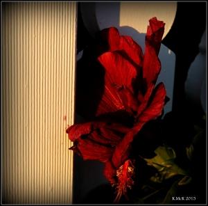 flower_47