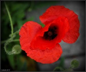 flower_49