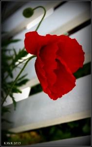 flower_50