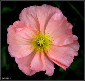 flower_6