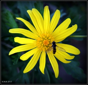 flower_7