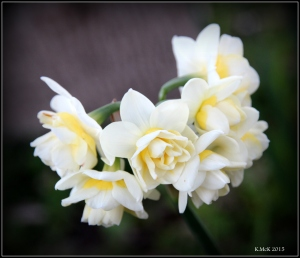 flower_9