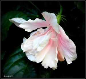 flower_hp_31