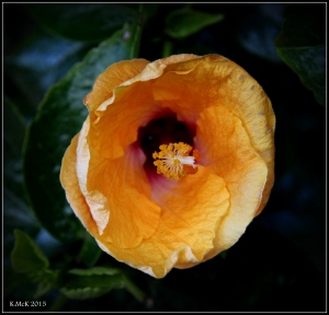 flower_hp_32