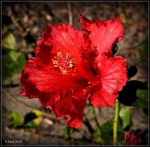 flower_hp_34