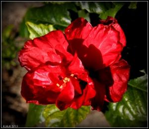 flower_hp_35