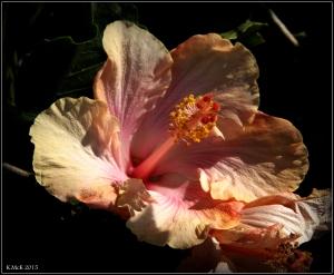 flower_hp_37