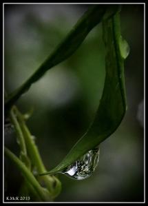 drops_12