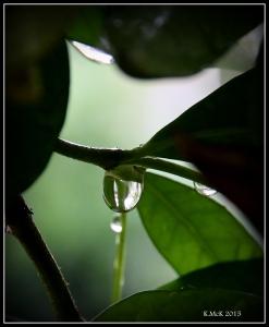 drops_13