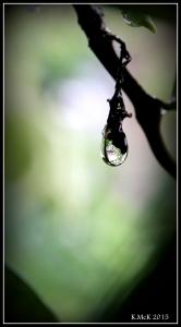 drops_14