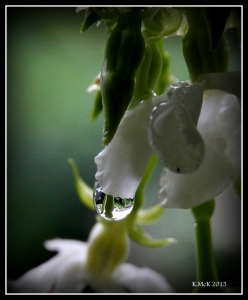 drops_16