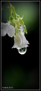 drops_17