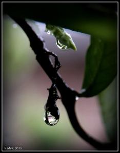 drops_18