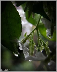 drops_24