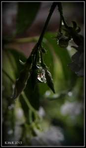 drops_3