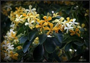 flowered_1