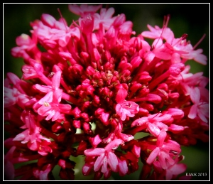flowers_13