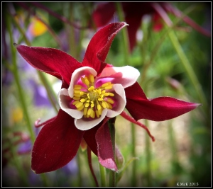flowers_16