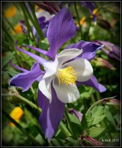 flowers_18