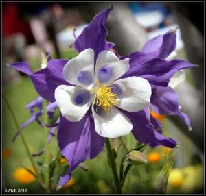 flowers_19