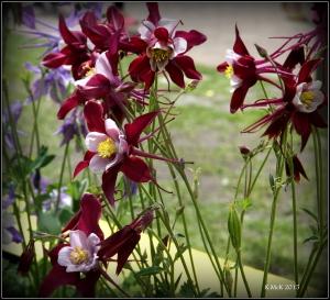 flowers_21