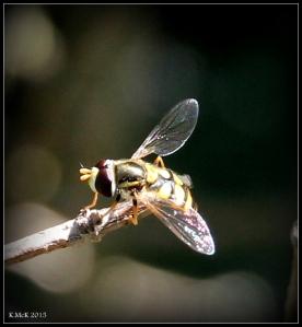 fly_2