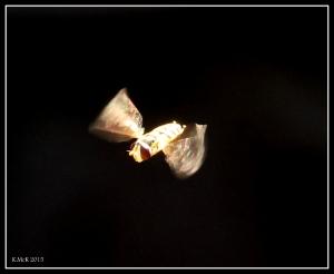 fly_3