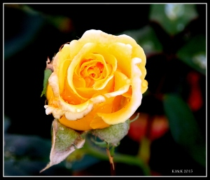 2016_calendar_rose_12