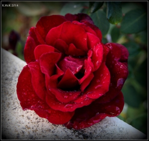 2016_calendar_rose_16