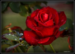 2016_calendar_rose_7