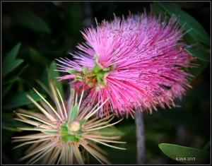 2016_Calendar_wildflowers_1