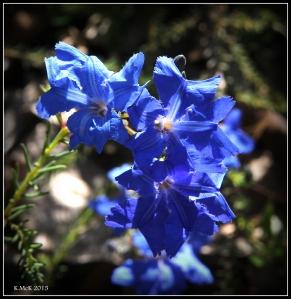 2016_calendar_wildflowers_11
