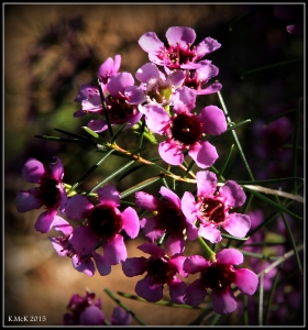 2016_calendar_wildflowers_12