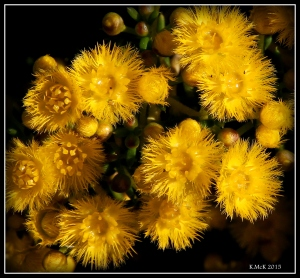 2016_calendar_wildflowers_16