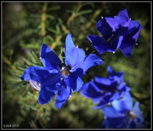 2016_calendar_wildflowers_19