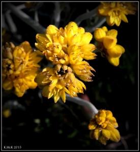 2016_calendar_wildflowers_24