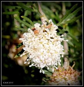 2016_calendar_wildflowers_28
