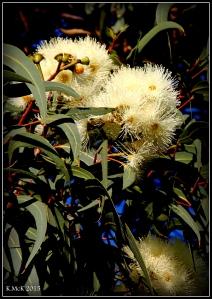 2016_calendar_wildflowers_3