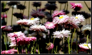2016_calendar_wildflowers_30