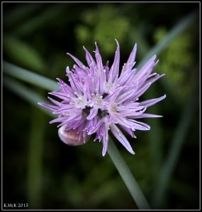 2016_calendar_wildflowers_31